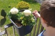 Wiosenne-kwiatki-zasadzone-u-Jasia-G.