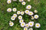 Piękna-flora-u-Jasia-G.